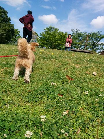 走るチビ犬