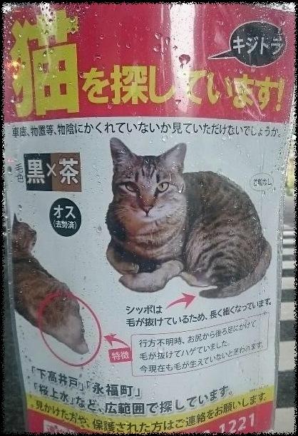 捜査中ニャンコ