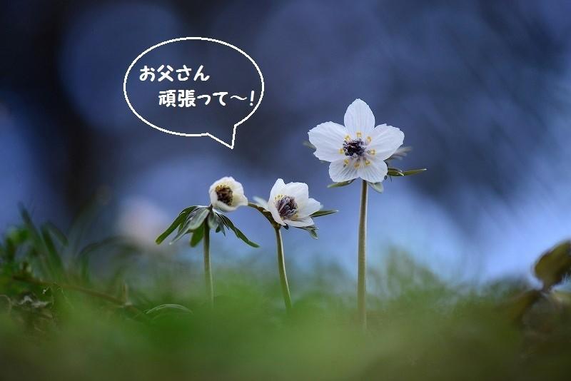 布瀬の節分草1