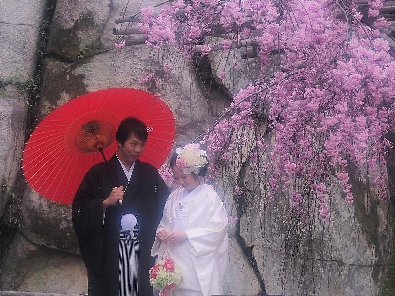 枝垂れ桜7
