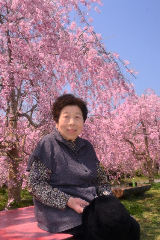 たけべの森の枝垂れ桜5t