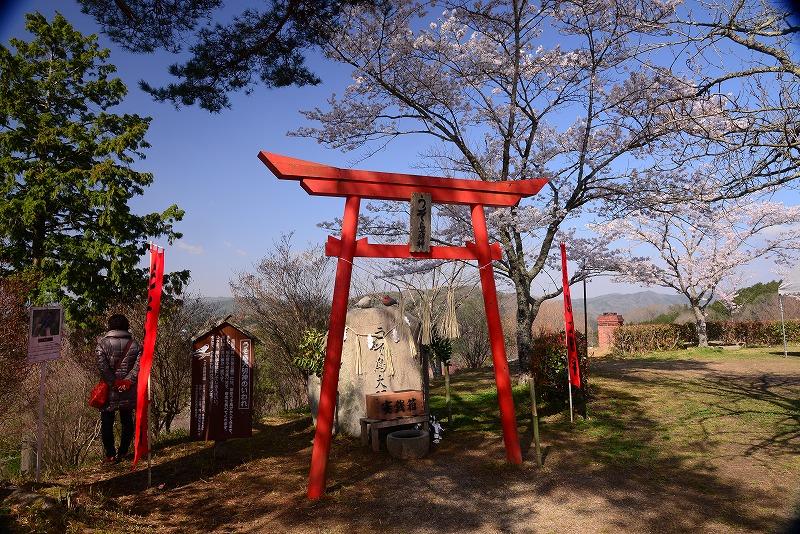 三休公園の桜23