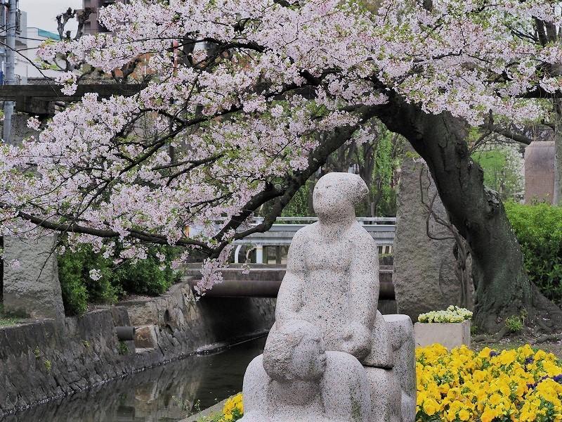 枝川緑道公園の桜2