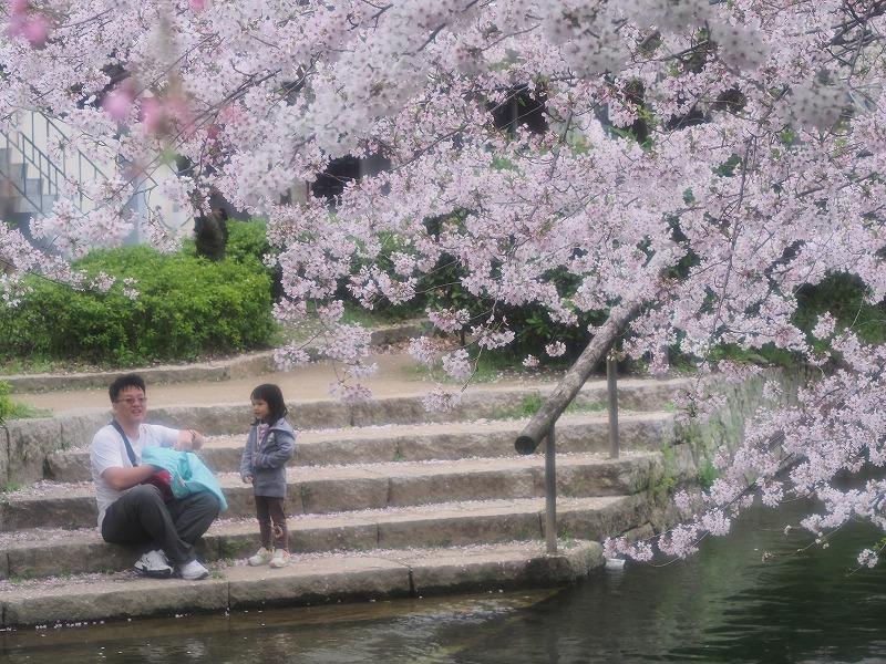 西川緑道公園の桜12