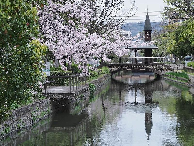 西川緑道公園の桜1