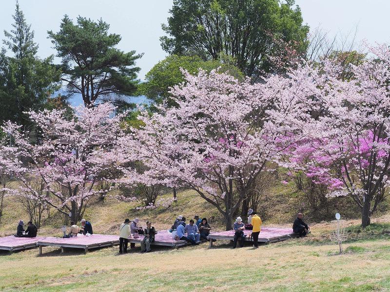 たけべの森の枝垂れ桜10