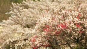 平谷温泉のお花