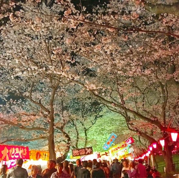 権現堂の夜桜