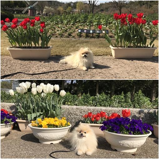 cats3_201704041757580a8.jpg