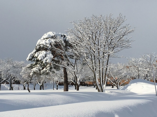 2017-02-19雪景色