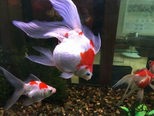 2017-02-28金魚