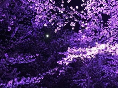 2017-04-10桜ロードと月