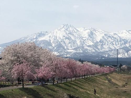 2017-04-16妙高山と桜