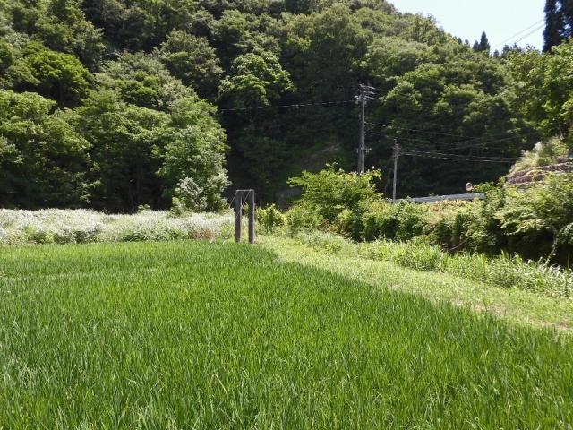 八坂小菅の水管吊橋② (5)