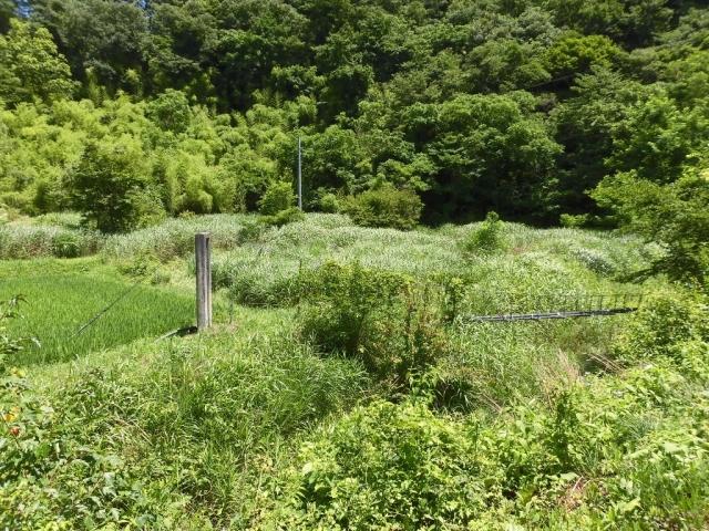八坂小菅の水管吊橋② (6)