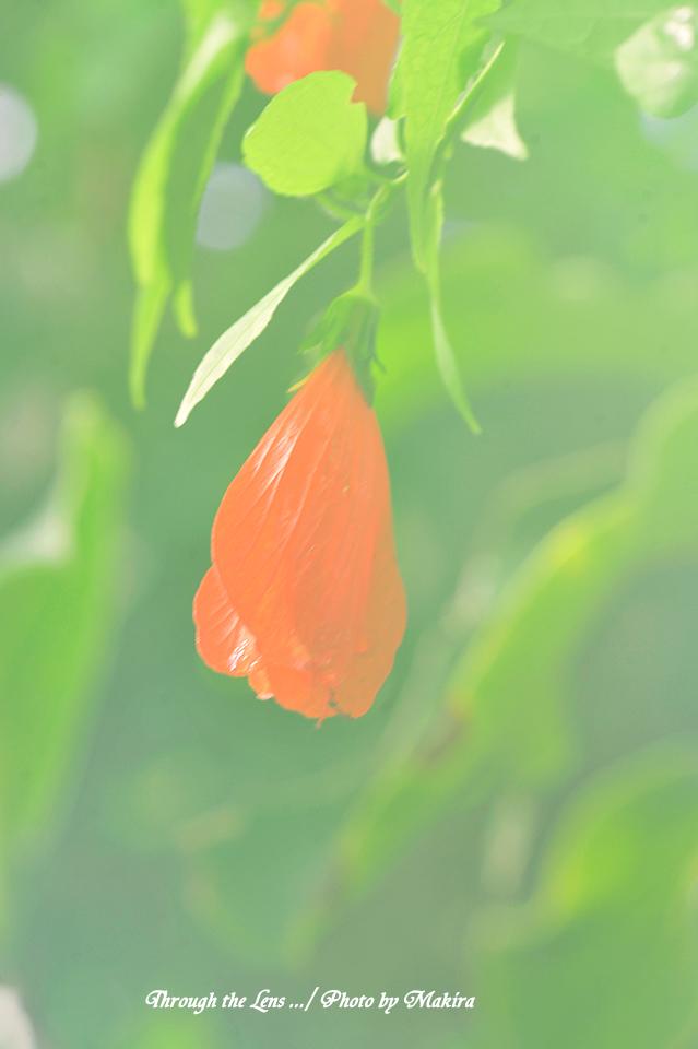 ウナヅキフヨウ1