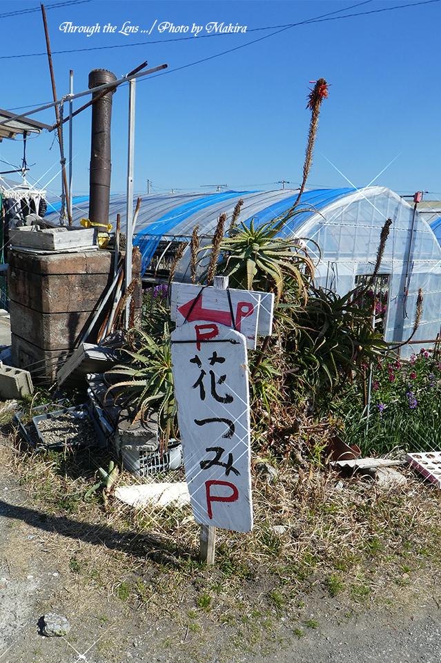 平磯花畑TZ1