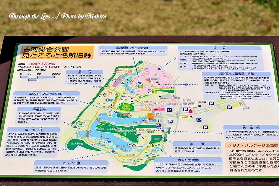古河総合公園1