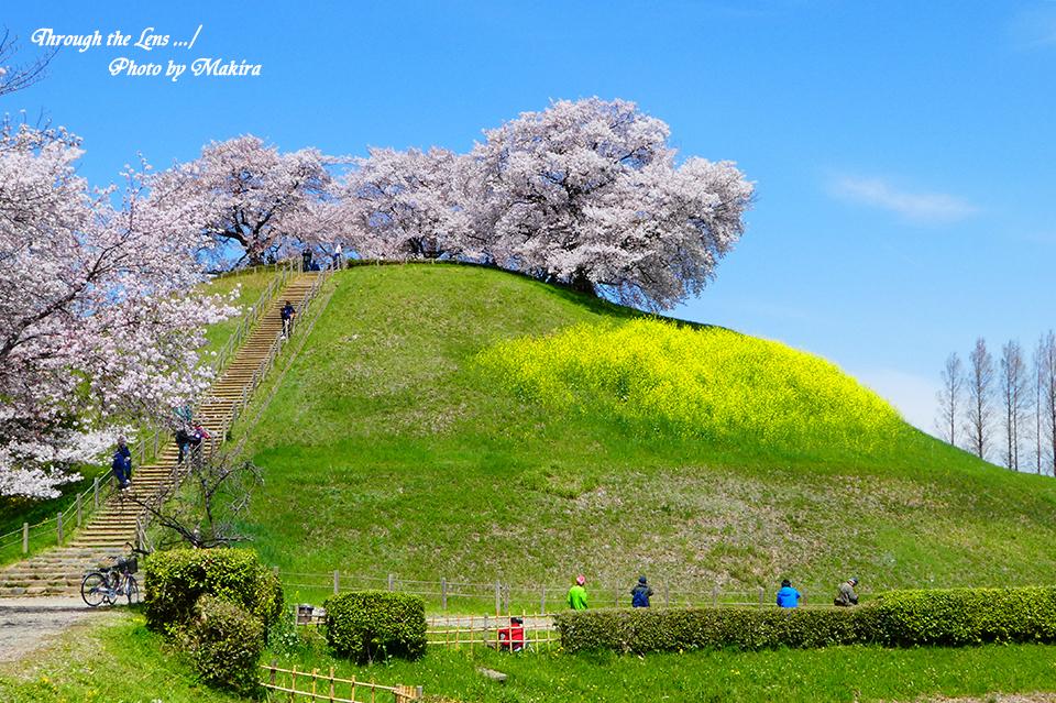 丸墓山古墳と桜TZ1