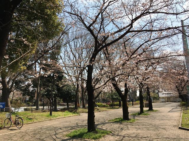 2017年4月3日五分咲きの東京桜1 by占いとか魔術とか所蔵画像