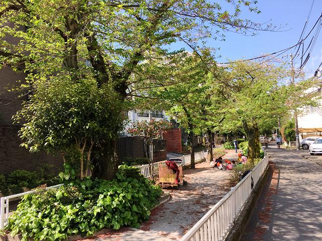 完全に青葉になった2017年の東京の桜2 by占いとか魔術とか所蔵画像