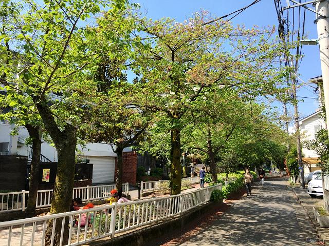 完全に青葉になった2017年の東京の桜3 by占いとか魔術とか所蔵画像