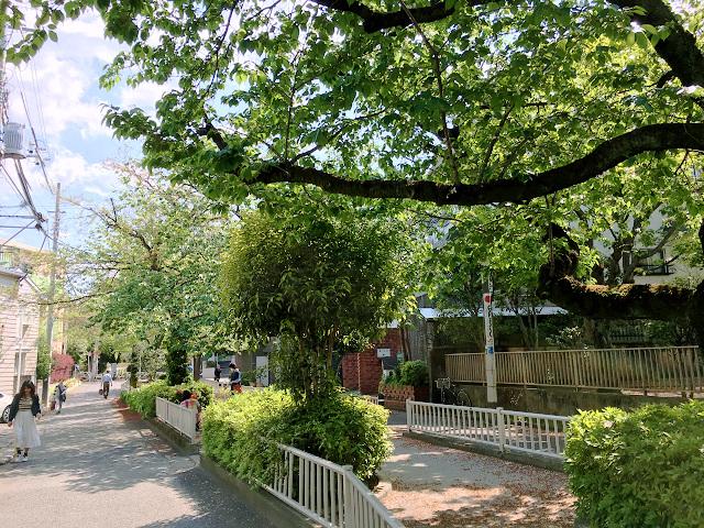完全に青葉になった2017年の東京の桜5 by占いとか魔術とか所蔵画像