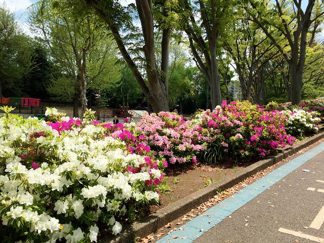 春の草木5 by占いとか魔術とか所蔵画像