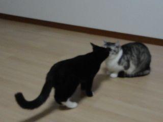 クレアとスー