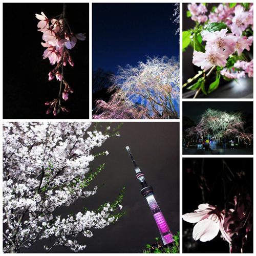 sakura_pmr500.jpg