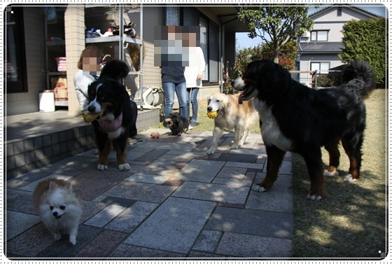 2017,4,2お庭遊び12