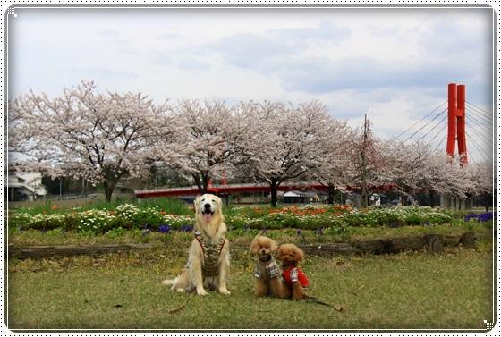 2017,4,10桜6
