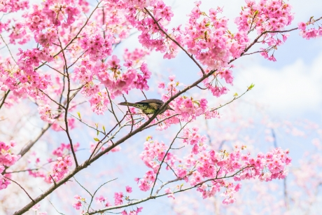 paradise_on_kyoto_10.jpg