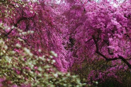 paradise_on_kyoto_41.jpg