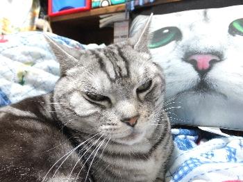 猫顔クッション2