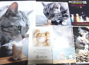 猫ひげスタンド写真展