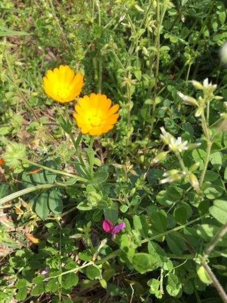 0416野の花