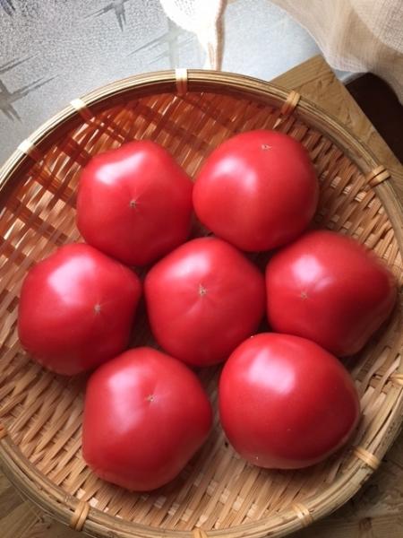 0420トマト