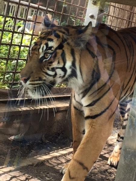 0420東山動物園