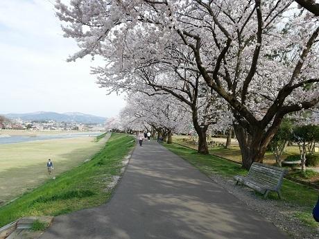 0412saiawa1.jpg