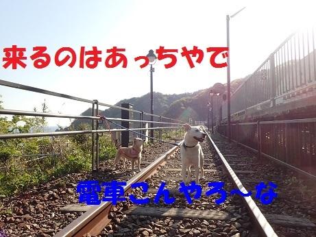 P4280852.jpg