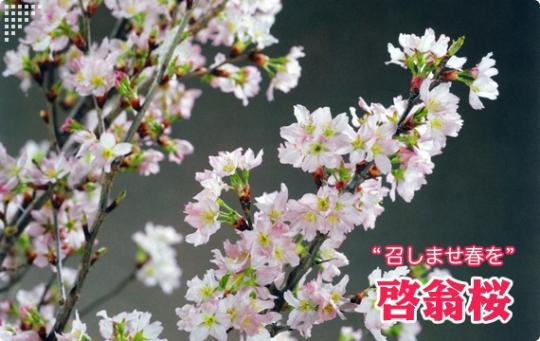 title-keiou.jpg