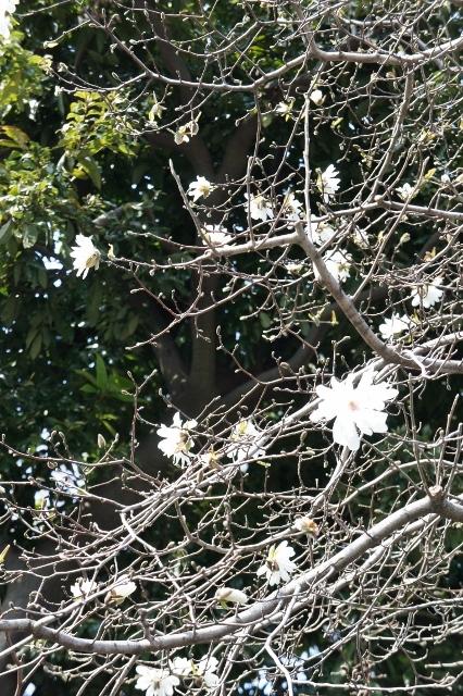 桜パトロール ① 19