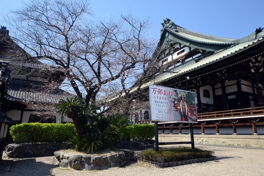 大念仏寺・桜 (0)