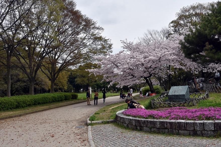 大仙・桜 (18)