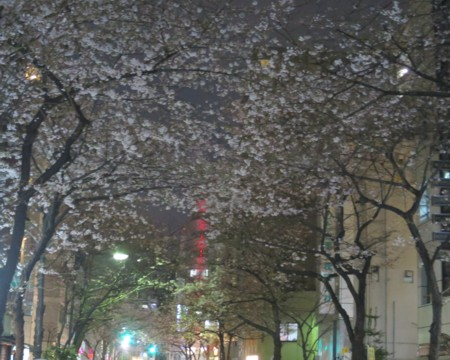 sakura tunnel (1)
