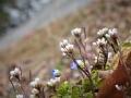 花咲き群れる土手