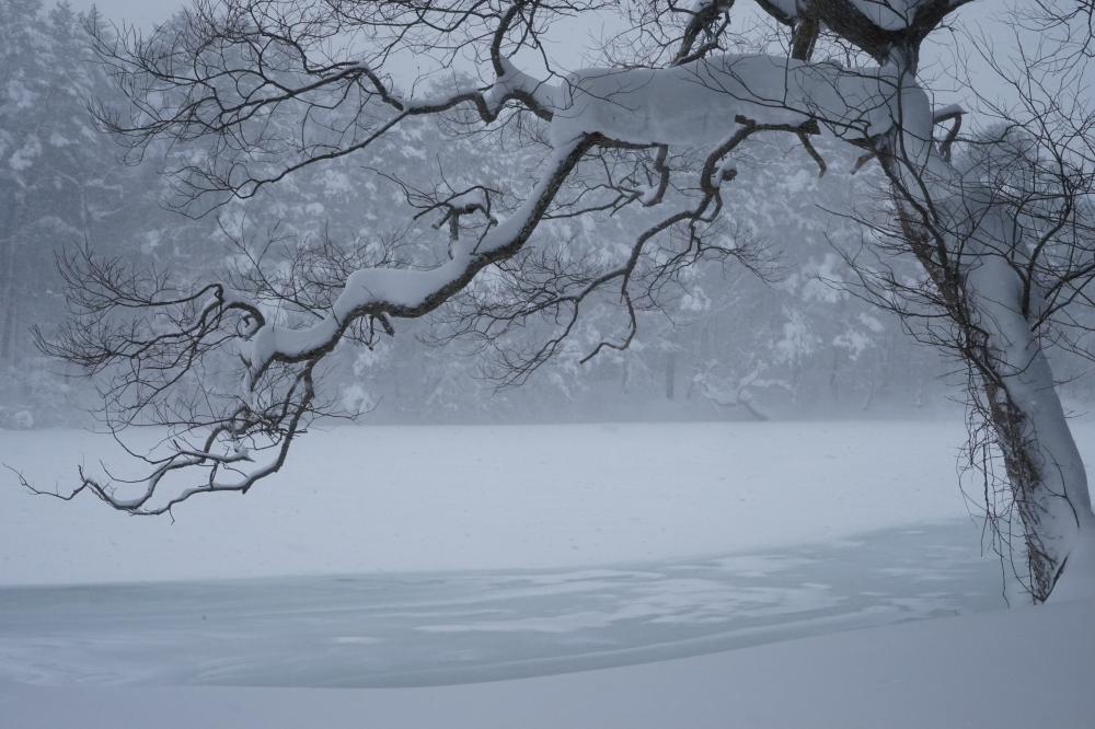 木のある沼
