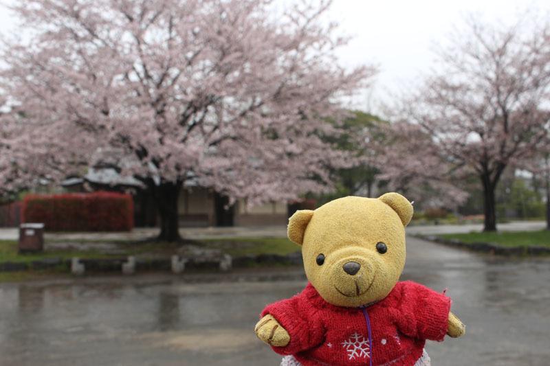 駿府城公園で 桜と 雨 170411-2