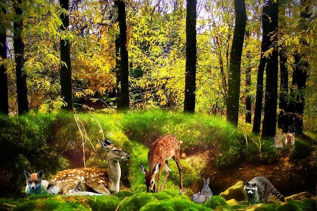 forest-1603598_640.jpg